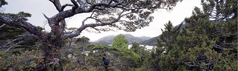 Campana Extractor para Cocina Isla - Precios en Buscap