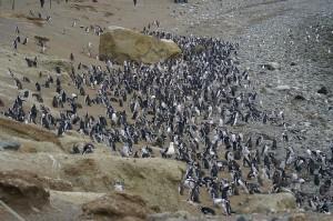 6940-pinguineras-seno-otway-300x199