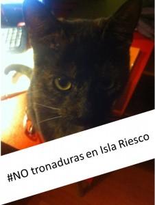 gato Sonia Reyes